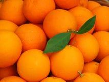 Πορτοκάλια της Βαλένθια με το ένα που παρουσιάζει μίσχο με τα φύλλα Στοκ Φωτογραφίες