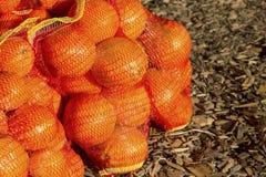 πορτοκάλια τσαντών στοκ φωτογραφία με δικαίωμα ελεύθερης χρήσης