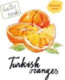 Πορτοκάλια Watercolor Στοκ Εικόνες