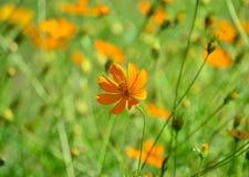 πορτοκάλι λουλουδιών Στοκ φωτογραφία με δικαίωμα ελεύθερης χρήσης