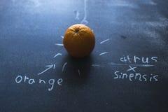 Πορτοκάλι σε ένα μαύρο υπόβαθρο μεταλλινών με τις επιγραφές κιμωλίας Στοκ φωτογραφίες με δικαίωμα ελεύθερης χρήσης
