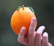 Πορτοκάλι στη διάθεση Στοκ εικόνα με δικαίωμα ελεύθερης χρήσης