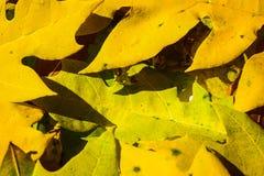 πορτοκάλι φύλλων ομάδας ανασκόπησης φθινοπώρου υπαίθριο υπαίθριος Στοκ φωτογραφία με δικαίωμα ελεύθερης χρήσης