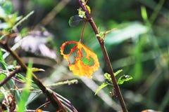 πορτοκάλι φύλλων πτώσης Στοκ εικόνα με δικαίωμα ελεύθερης χρήσης