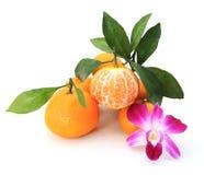 Πορτοκάλι Στοκ φωτογραφίες με δικαίωμα ελεύθερης χρήσης