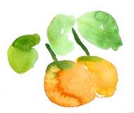 Πορτοκάλι watercolor Στοκ Εικόνες