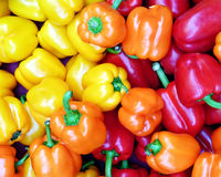 πορτοκαλής κόκκινος κίτ&rh Στοκ εικόνα με δικαίωμα ελεύθερης χρήσης