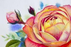 Πορτοκαλής ρόδινος αυξήθηκε λουλούδι Έργα ζωγραφικής Watercolor Στοκ Φωτογραφίες