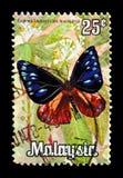 Πορτοκαλής-στιγμιαίος κόρακας (leucostictos Euploea), πεταλούδες serie, circa 1970 στοκ φωτογραφία με δικαίωμα ελεύθερης χρήσης