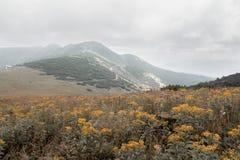 Πορτοκαλί άγριο λιβάδι λουλουδιών στα βουνά Στοκ φωτογραφία με δικαίωμα ελεύθερης χρήσης