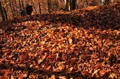 πορτοκαλί δάσος Στοκ Φωτογραφία