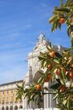 Πορτοκαλί δέντρο στο μέρος εμπορίου στη Λισσαβώνα, Πορτογαλία ημέρα ηλιόλουστη Στοκ Εικόνα