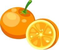 πορτοκαλί διάνυσμα Στοκ Εικόνες