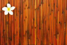 πορτοκαλί κόκκινο plumeria λο&upsil Στοκ Εικόνες