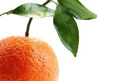 πορτοκαλί λευκό Στοκ Εικόνα