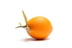 πορτοκαλί λευκό Στοκ Φωτογραφίες