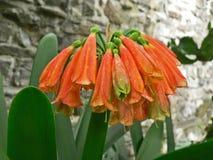 Πορτοκαλί λουλούδι ανθών κήπων την άνοιξη Μαγική εποχή άνοιξης Στοκ Εικόνες