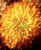 Πορτοκαλί λουλούδι το καλοκαίρι Στοκ φωτογραφία με δικαίωμα ελεύθερης χρήσης