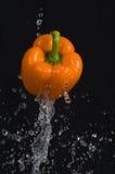 πορτοκαλί πιπέρι Στοκ Φωτογραφία
