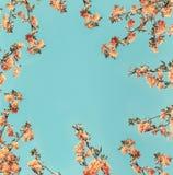 Πορτοκαλί πλαίσιο σχεδιαγράμματος ανθών στο μπλε υπόβαθρο Στοκ Φωτογραφία