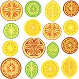 πορτοκαλί πρότυπο ασβέστη λεμονιών εσπεριδοειδών Απεικόνιση αποθεμάτων