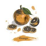 Πορτοκαλί σκίτσο Εκλεκτής ποιότητας συρμένο χέρι διάνυσμα μελανιού του πορτοκαλιού, που απομονώνεται στο άσπρο υπόβαθρο με τις σκ Στοκ Εικόνες