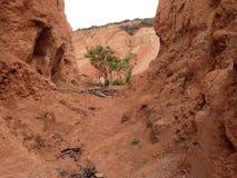 Πορτοκαλιά έρημος Zabrinski ` s στοκ φωτογραφίες