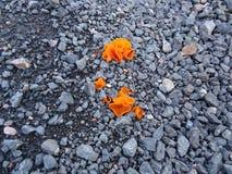 Πορτοκαλιά ανάπτυξη μανιταριών στο αμμοχάλικο στοκ εικόνες