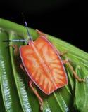 πορτοκαλιά ασπίδα προγρ&alp στοκ εικόνα με δικαίωμα ελεύθερης χρήσης