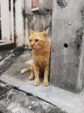 Πορτοκαλιά γάτα οδών στοκ φωτογραφίες