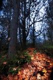 Πορτοκαλιά διάβαση φύλλων φθινοπώρου μέσω του σκοτεινού δάσους