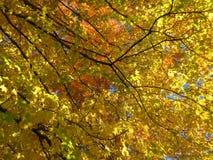 Πορτοκαλιά και κίτρινα φύλλα φθινοπώρου Νοεμβρίου στοκ φωτογραφία