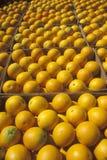 Πορτοκαλιά κιβώτια Στοκ Εικόνες
