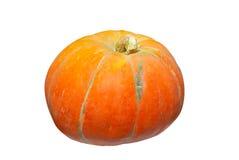 πορτοκαλιά κολοκύθα Στοκ Εικόνες