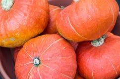 Πορτοκαλιά κολοκύνθη hubbard για την πώληση στην αγορά Στοκ εικόνα με δικαίωμα ελεύθερης χρήσης
