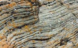Πορτοκαλιά λειχήνα στον γκρίζο βράχο Στοκ Φωτογραφία