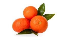 Πορτοκαλιά μανταρίνια, κλημεντίνες, tangerines ή μικρά πορτοκάλια με τα φύλλα Στοκ Εικόνες