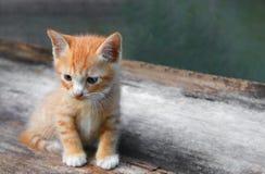 Πορτοκαλιά, μικρή γάτα πορτρέτου γατακιών χαριτωμένη στον ξύλινο στοκ εικόνες