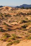 πορτοκαλιά ρόδινη άμμος θάμνων Στοκ Εικόνες