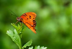 πορτοκαλιά στήριξη πεταλ& Στοκ φωτογραφίες με δικαίωμα ελεύθερης χρήσης