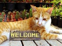 πορτοκαλιά συνεδρίαση γατών γατακιών με τη ζωή ευπρόσδεκτων σημαδιών ακόμα Στοκ Φωτογραφίες