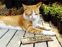 πορτοκαλιά συνεδρίαση γατών γατακιών με τη ζωή ευπρόσδεκτων σημαδιών ακόμα Στοκ φωτογραφία με δικαίωμα ελεύθερης χρήσης