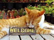 πορτοκαλιά συνεδρίαση γατών γατακιών με τη ζωή ευπρόσδεκτων σημαδιών ακόμα Στοκ φωτογραφίες με δικαίωμα ελεύθερης χρήσης