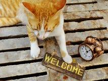 πορτοκαλιά συνεδρίαση γατών γατακιών με τη ζωή ευπρόσδεκτων σημαδιών ακόμα Στοκ Εικόνες