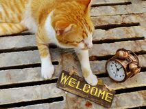 πορτοκαλιά συνεδρίαση γατών γατακιών με τη ζωή ευπρόσδεκτων σημαδιών ακόμα Στοκ εικόνα με δικαίωμα ελεύθερης χρήσης
