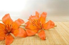 πορτοκαλιά τίγρη κρίνων Στοκ Εικόνες