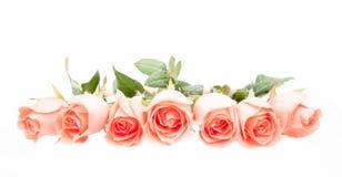 Πορτοκαλιά τριαντάφυλλα Στοκ φωτογραφία με δικαίωμα ελεύθερης χρήσης