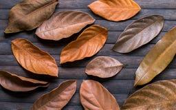 Πορτοκαλιά φύλλα στο ξύλινο υπόβαθρο Εποχιακό πρότυπο εμβλημάτων φθινοπώρου Στοκ φωτογραφία με δικαίωμα ελεύθερης χρήσης
