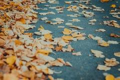 Πορτοκαλιά φύλλα φθινοπώρου στην άσφαλτο στοκ φωτογραφία με δικαίωμα ελεύθερης χρήσης