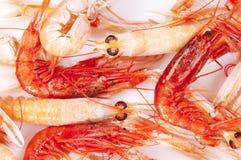πορτοκαλιές γαρίδες Στοκ εικόνες με δικαίωμα ελεύθερης χρήσης